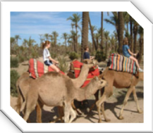 Camel trekking in the palmeraie, Marrakech